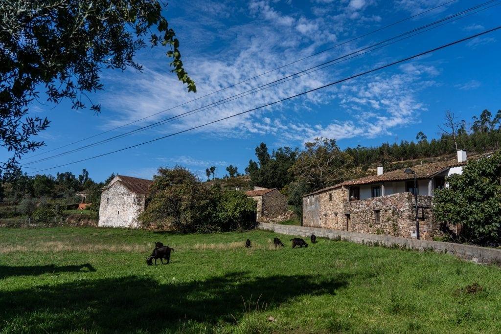 Campo de pastagens na aldeia